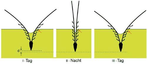 (Así perfora el suelo la semilla del trigo.) (Foto: Max Planck Institute of Colloids and Interfaces)