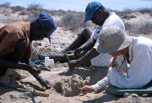 (Meave Leakey y otros paleontólogos trabajando sobre el cráneo KNM-ER 42700.) (Foto: Copyright Koobi Fora Research Project; L.N. Leakey)