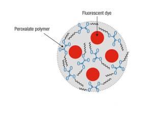 (La nanopartícula contiene un tinte fluorescente.) (Foto: GIT)