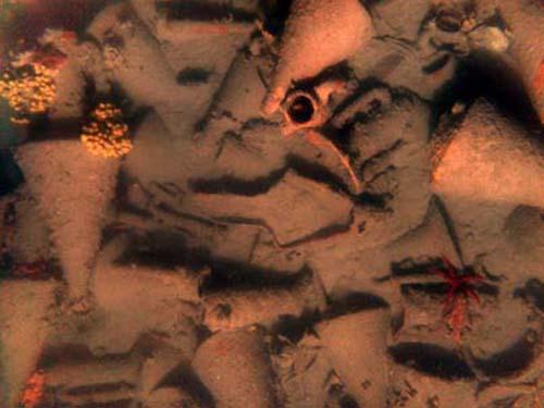 (Anforas en el fondo del mar Egeo.) (Foto: � / Chios Shipwreck Survey 2005 - WHOI, EUA,